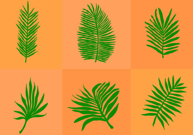 Palm Leaf Isolated - Kostenloses vector #200137