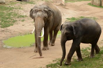 Elephant walking with its baby - image gratuit #201437