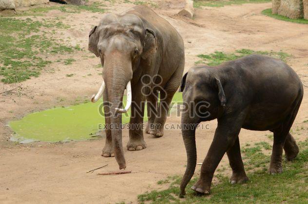 Éléphant marchant avec son bébé - image gratuit #201437
