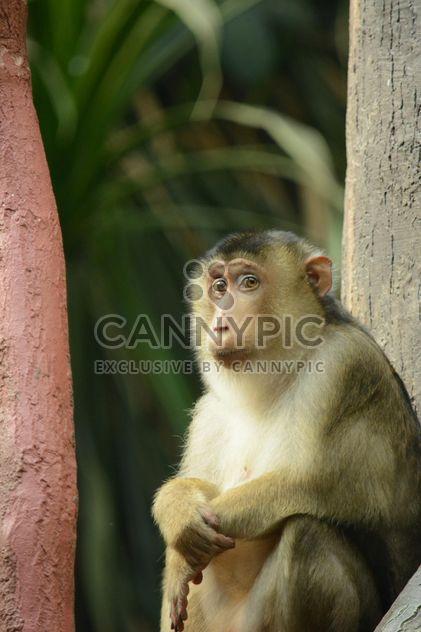Monkey - Free image #201447