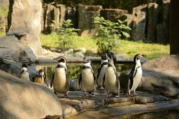 Penguins - image #201457 gratis