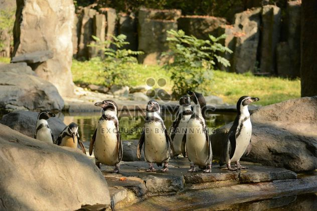 Pinguine - Kostenloses image #201457