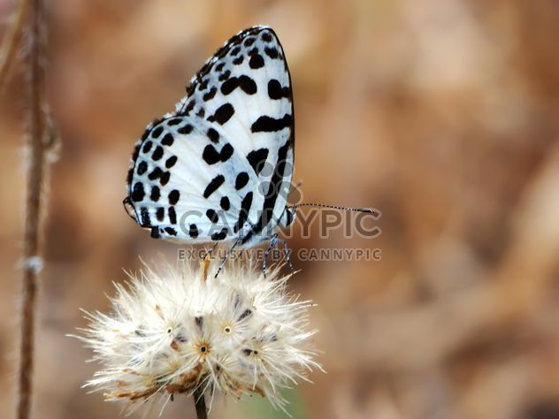 Butterfly called - Free image #201507