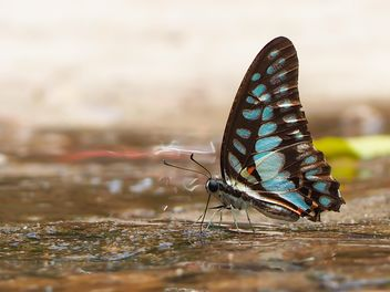 Black-blue butterfly - бесплатный image #201557