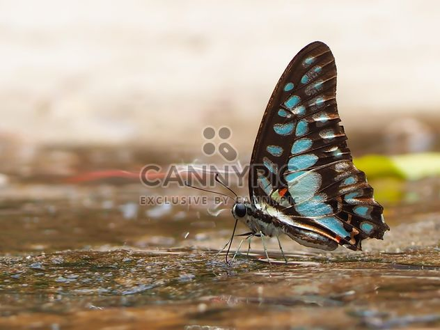 Black-blue butterfly - Free image #201557