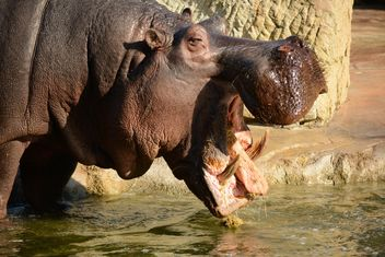 Hippo In The Zoo - Kostenloses image #201597