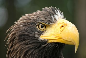 Close-Up Portrait Of Eagle - image gratuit #201647