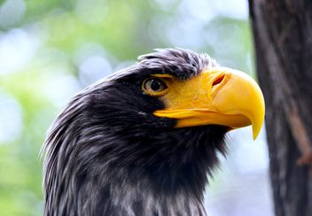 Close-Up Portrait Of Eagle - image gratuit(e) #201737
