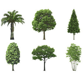 Six Green Trees - Free vector #206867