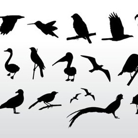 Various Bird Silhouettes - Free vector #209697