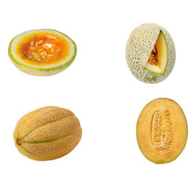 Vector Illustration Of Melons - vector gratuit #212697