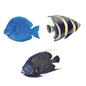 Vector Ocean Fish - бесплатный vector #213147