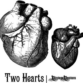 Old Medical Illustrations Of The Heart - Free vector #219177