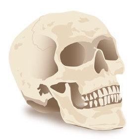 Halloween Skull - Free vector #219867
