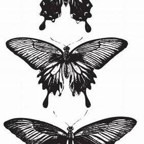 3 Vector Butterflies - Free vector #223417