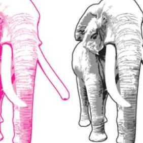 Elephant Vector - vector #223937 gratis