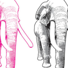 Elephant Vector - Free vector #223937