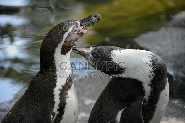 Pingüinos en el zoológico -  image #225337 gratis