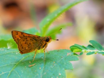 Butterfly close-up - Free image #225377