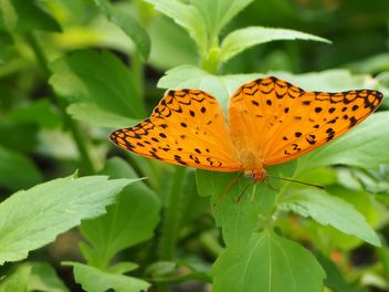 Butterfly close-up - Free image #225387