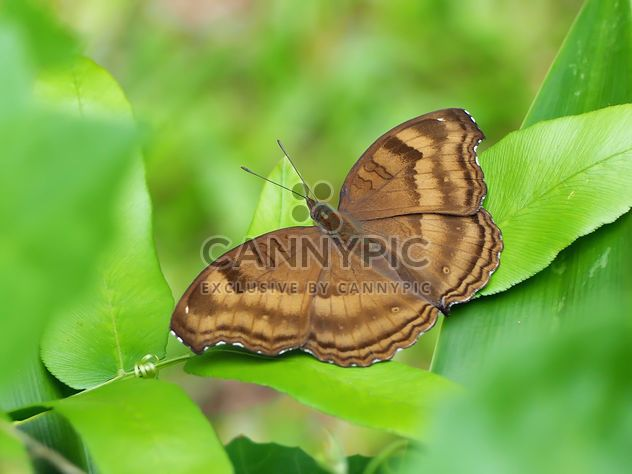 Butterfly close-up - Free image #225417