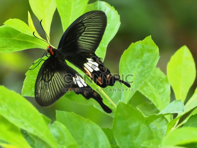 Бабочки крупным планом - Free image #225427