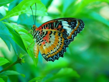 Butterfly close-up - Free image #225437
