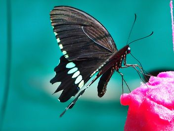 Butterfly close-up - image gratuit #225447
