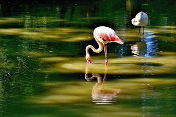 flamingo - бесплатный image #229367