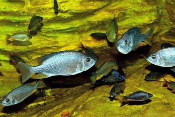 Aquarium - Free image #229407