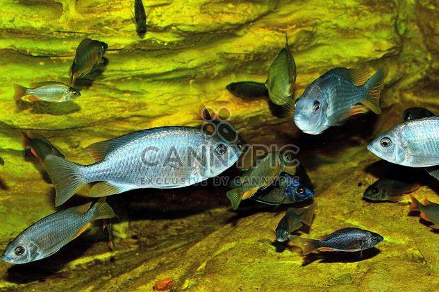 Aquarium - Kostenloses image #229407