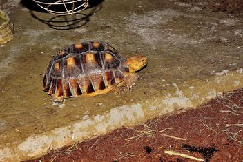 Turtle - Free image #229447