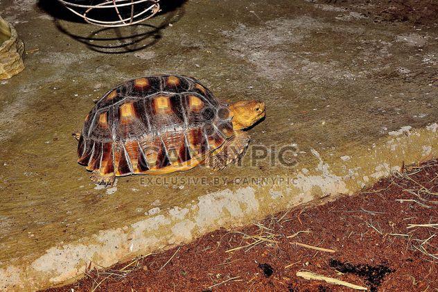 Schildkröte - Kostenloses image #229447