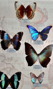 Collection of butterflies - image #229457 gratis