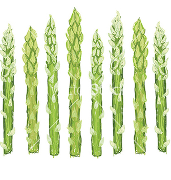 Free closeup of fresh green asparagus vegetable vector - бесплатный vector #233377