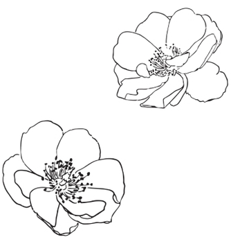 Free two hand drawn wild roses vector - Free vector #235547