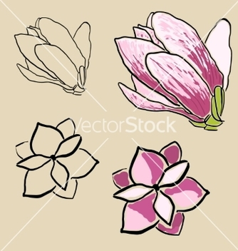 Free set of magnolia flowers vector - Free vector #235957