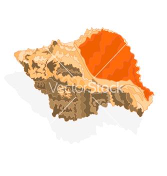 Free seashell marine life vector - Free vector #237127