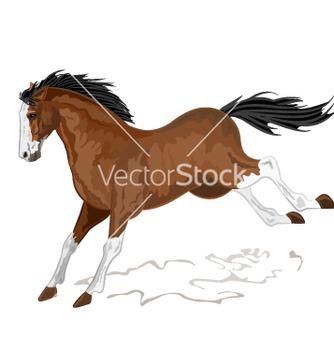 Free wild horse vector - Free vector #237627