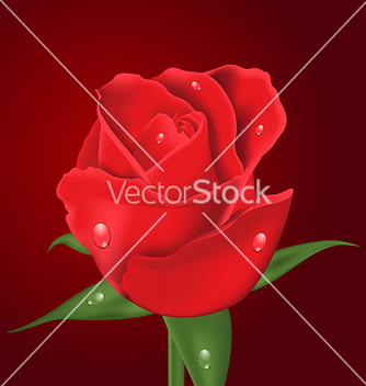 Free closeup beautiful realistic rose on red vector - бесплатный vector #238317