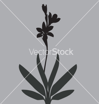 Free simple lily vector - Free vector #271087