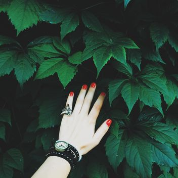 Female hand with red nails touching green leaves - image #271697 gratis