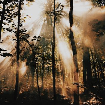 Sunlight in the forest - image gratuit(e) #271707