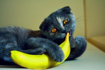 Cute cat with banana - image #271957 gratis