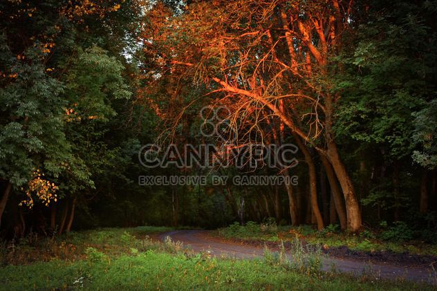 Autumn forest - Free image #272987