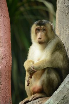 monkey in the zoo - image #273047 gratis