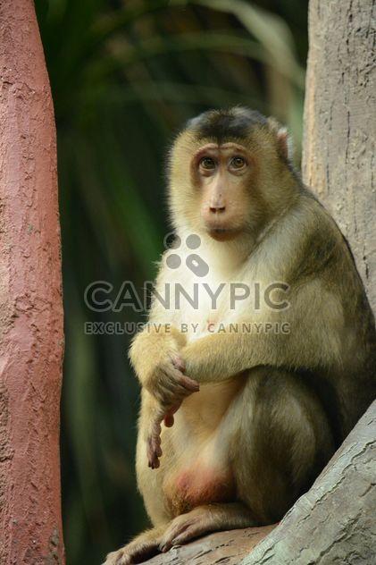 обезьяна в зоопарке - бесплатный image #273047