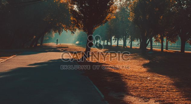 Autumn park in sunlight - Free image #273797