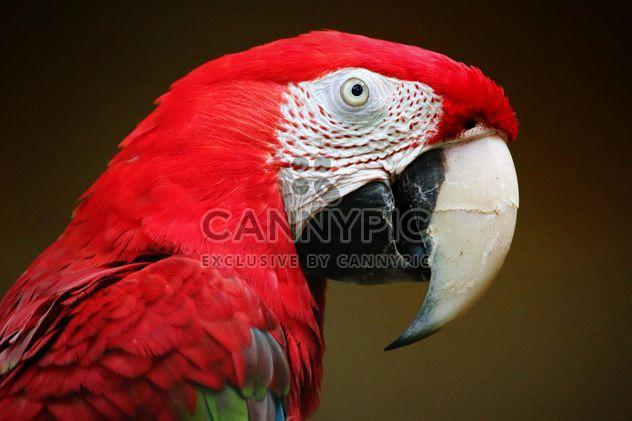 Попугай ара красный - бесплатный image #274757