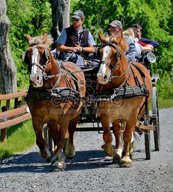 carriage drawn by two horses - image gratuit(e) #274917